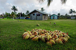 Coconut Tree in Aitutaki Lagoon Cook Islands Stock Photos
