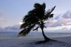 Coconut Tree in Aitutaki Lagoon Cook Islands Stock Images