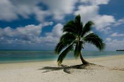 Coconut Tree in Aitutaki Lagoon Cook Islands Stock Photo