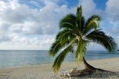 Coconut Tree in Aitutaki Lagoon Cook Islands Royalty Free Stock Photos