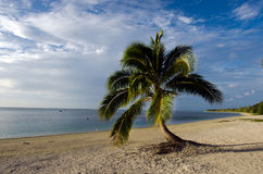 Coconut Tree in Aitutaki Lagoon Cook Islands Stock Photography