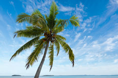 Coconut Tree in Aitutaki Lagoon Cook Islands Royalty Free Stock Photos