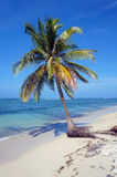 Coconut tree alone on the beach Stock Image