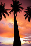 Coconut tree with amazing sunrise. Cloudy sunset hawaii Stock Photo