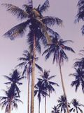 Coconut tree Art idea Wallpaper and Background Stock Image