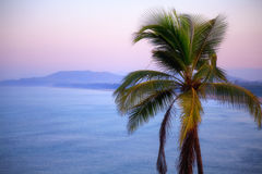 Coconut tree on background of sea and mountains. Sunrise Stock Photography