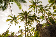 Coconut tree background sky cloud in island Royalty Free Stock Photography
