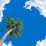 Coconut tree background Stock Photography