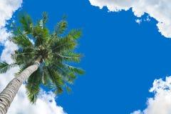 Coconut tree background Stock Photos