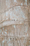 Coconut Tree Bark. Striped bark of a coconut palm tree stock image