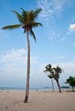 Coconut tree on beach Stock Photo