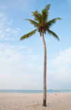 Coconut tree on beach. Coconut tree on the beach with warm light Stock Images