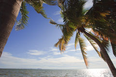 Coconut tree beside  beach Stock Photo