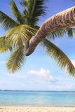 Coconut tree at beach Stock Images