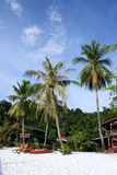 Coconut Tree at Beach. Coconut trees at Redang Island Royalty Free Stock Images