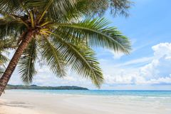 Coconut tree on the beach Stock Photography