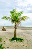 Coconut tree on the beach Stock Photo