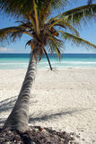Coconut tree on beach. A view of a leaning coconut tree on a brilliant white, tropical beach Stock Images
