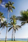 Coconut Tree at Beach Stock Photos