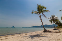 Coconut tree on the beach.  Stock Photography