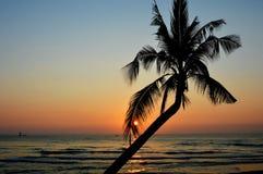 Coconut tree Royalty Free Stock Image