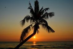 Coconut tree on the beach Stock Image