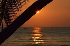 Coconut tree on the beach Stock Photos