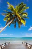 Coconut tree at beach Royalty Free Stock Photos