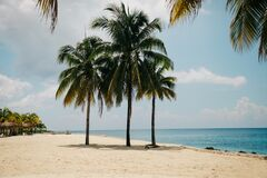 Coconut Tree on the Beach during Daytime Stock Images