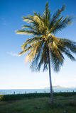 Coconut tree on the beach Stock Photo