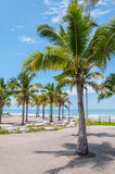 Coconut tree on the beach Royalty Free Stock Photography