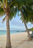 Coconut tree on the beach, Lipe island Royalty Free Stock Photography