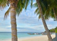 Coconut tree on the beach, Lipe island Royalty Free Stock Photos