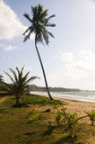 Coconut tree beach long bag corn island nicaragua Royalty Free Stock Images