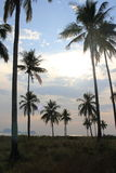 Coconut tree on the beach. Look like a painting royalty free stock photography