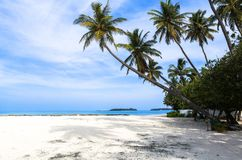 Coconut tree at beach in Maldives. This photo was taken in Maldives. All-inclusive resorts provide that wonderful feeling of luxury combined with the comfort stock image