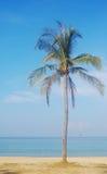 Coconut tree on the beach in Nha Trang, Vietnam Stock Image