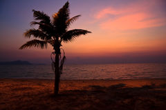 Coconut tree on the beach at sunset Stock Photo