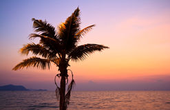 Coconut tree on the beach at sunset Royalty Free Stock Photography