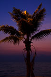 Coconut tree on the beach at sunset Stock Photos