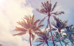 Coconut tree on beach, tree on beach, palm on beach. Beach vintage, beach retro Stock Image