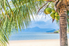 Coconut tree on the beach. Coconut tree on tropical beach stock photography