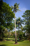 Coconut tree in the beautiful garden. With blue sky Stock Photography