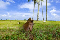 Coconut tree and beautiful nature at sunny day with cloudy blue sky background near the beach Stock Images