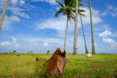 Coconut tree and beautiful nature at sunny day with cloudy blue sky background near the beach Stock Image
