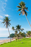 Coconut tree and beauty beach Stock Photography
