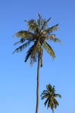 Coconut tree and bird on blue sky background Stock Images