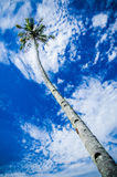 Coconut Tree and Blue Sky Stock Photography