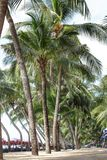 Coconut tree Stock Photo