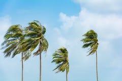 Coconut tree on blue sky Royalty Free Stock Photos
